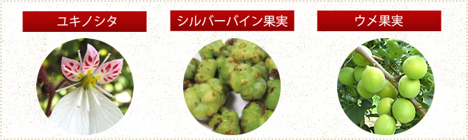ユキノシタ・シルバーバイン果実・ウメ果実
