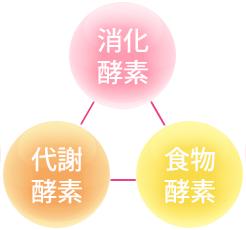 消化酵素・代謝酵素・食物酵素